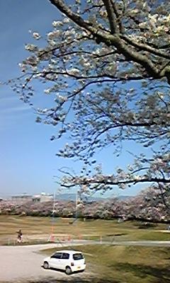 春うらら〜桜咲く!